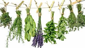 hierbas poderosas que traen equilibrio y armonía para su vida